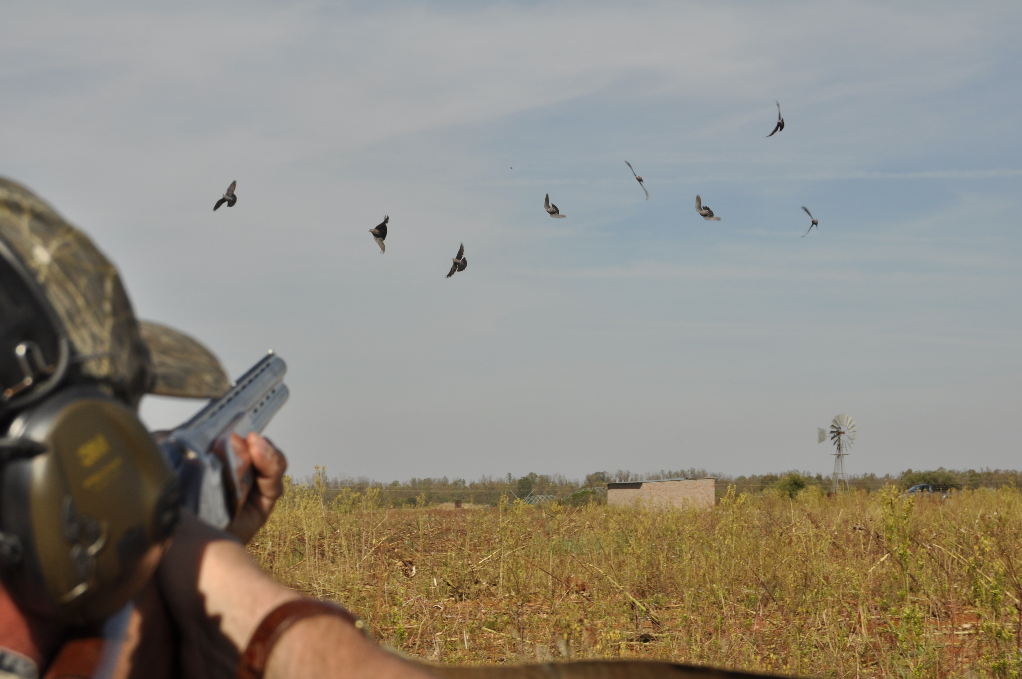Dove Shooting in South Africa